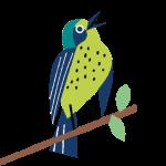 Oiseau_2